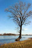 Tree in the spring floods inundated Stock Photo