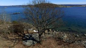 A tree during spring. In Norway stock video footage