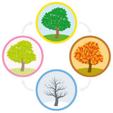 Tree Spring Summer Fall Winter Annual Cycle Stock Images