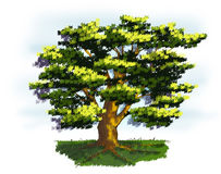 Tree in Springtime. Illustration of a old tree in springtime Royalty Free Stock Photos