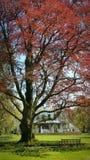 Tree   springtime Stock Photo