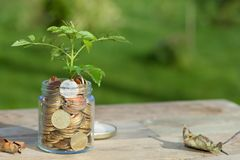A tree sprout in a glass jar filled with euro coins stock photo