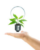 Tree sprout inside lamp light bulb on hand isolate Royalty Free Stock Images