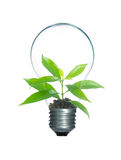 Tree sprout inside lamp light bulb isolate Stock Photos