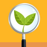 Tree sprout magnify Royalty Free Stock Photo