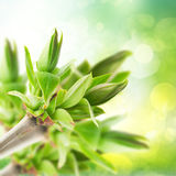 Tree sprouts  in garden Royalty Free Stock Photo