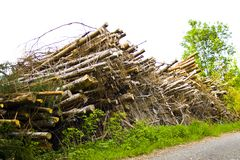 Tree stacks by deforestation in Bavaria, Germany stock images