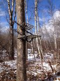 Tree stand Royalty Free Stock Image
