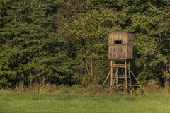 Tree stand near green forest Stock Photo