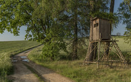 Tree stand near path in sunny evening Royalty Free Stock Image