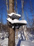 Tree stand with snow Stock Photography