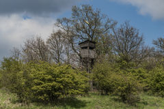 Tree stand in spring day in Ceske Stredohori Royalty Free Stock Photos