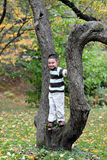 Tree Stander Royalty Free Stock Photos