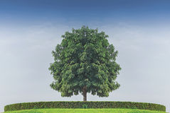 tree standing alone againt blue sky Stock Photography