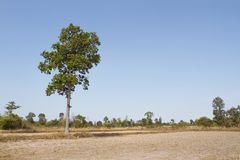 A tree standing alone Royalty Free Stock Images