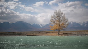 Tree standing alone on the shore of the river on a sunny autumn day. Beautiful footage stock footage
