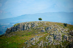 Tree standing alone royalty free stock photography