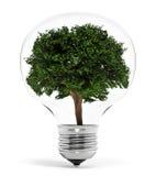 Tree standing inside the lightbulb  on white background. 3D illustration Stock Image