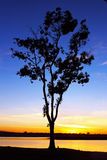 Tree at Dusk. A tree is standing at the Mission bay of San Diego, California royalty free stock photos
