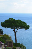 Tree Standing On the Sea Cliffs Over Positano Stock Image