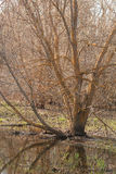 The tree standing in water Royalty Free Stock Photography