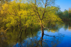 Tree Standing In Water During Spring Flood Royalty Free Stock Photography