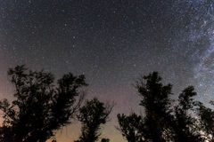 Tree  on a star sky background Stock Photos