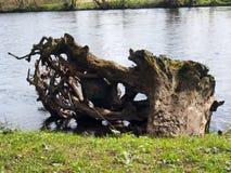 Tree Statue Stock Image
