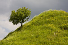 Tree on steep hillside Royalty Free Stock Photos