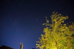 Tree on stellar sky Stock Images