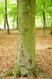 Tree stem Stock Photo