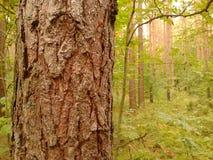 Tree stem Stock Image