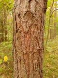 Tree stem Royalty Free Stock Photo
