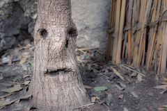 Tree stem that looks like a crying face with one teardrop on a b Stock Image