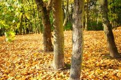 Tree stems Stock Photos