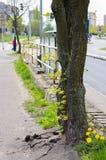 Tree stems Stock Image