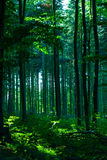 Tree Stems in Forest Stock Image