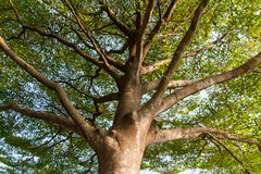 Tree. Stems, leaves healthy growth Stock Images