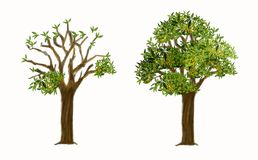 Tree with 2 step to Autumn isolate and clipping paths Stock Images