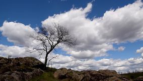 Tree in steppe swaying on a wind. Lonely tree in stone steppe swaying on a strong wind, clouds are moving fast in sky. Accelerated video, time laps stock footage