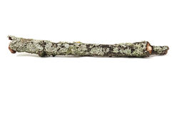 Tree stick with moss. Isolated on white background Royalty Free Stock Photo