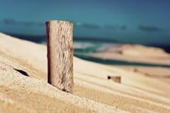 Tree stomp on dune - retro. Tree stomp on dune next to sea - dark retro Stock Image