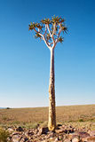 Tree in stone desert Royalty Free Stock Photos