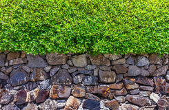 The tree and stone design for decorate garden. Royalty Free Stock Image