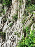 Tree on the stone Royalty Free Stock Image