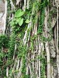 Tree on the stone Royalty Free Stock Photo