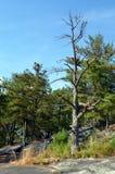 Tree of stone mountain Royalty Free Stock Photos