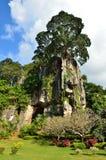 Tree of stone mountain Royalty Free Stock Photography