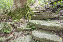 Tree and stone stairway Stock Photos
