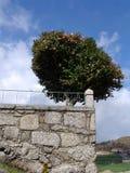 Tree and stone wall. Blue sky Royalty Free Stock Photography